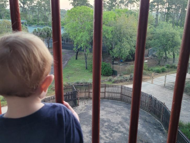 Guest Photo from Kayla: Guest on balcony at Animal Kingdom Villas
